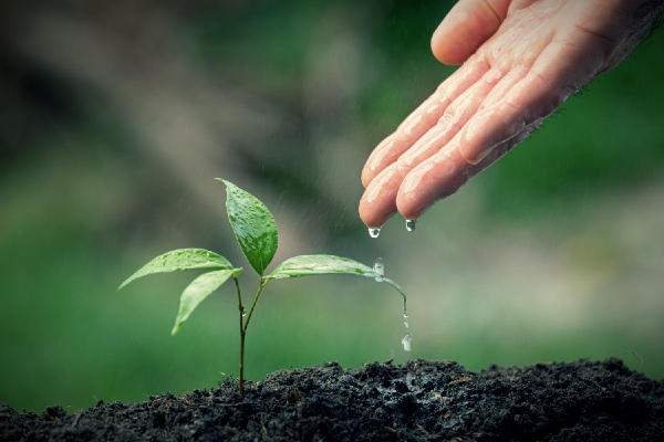 Árboles que necesitan más agua
